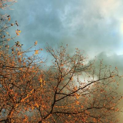 arbre sur ciel