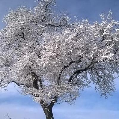 St Armou sous la neige