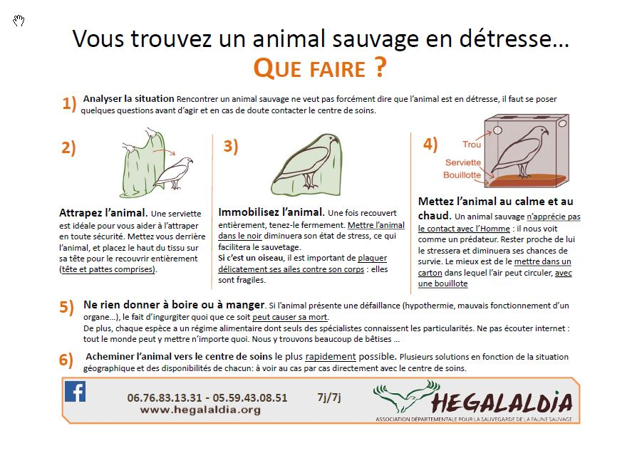 Sos animaux sauvages